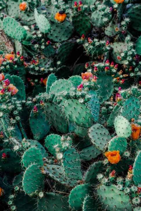 Photo by Adrianna Calvo on Pexels.com